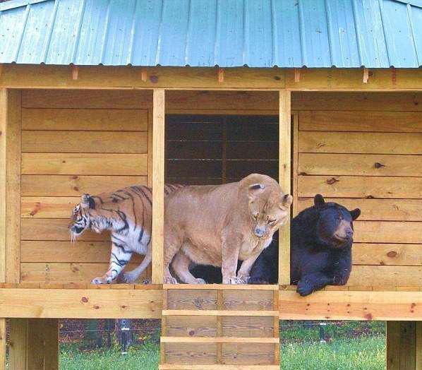 BLT三人组从来形影不离。(Noah