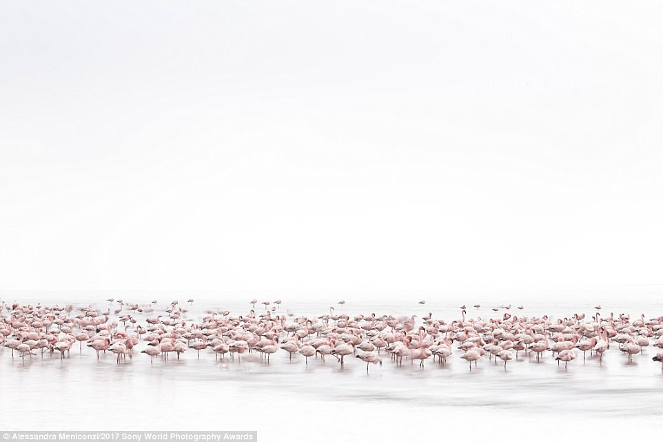 These flamingos were shot on the shores of the Namibian Coast. Photographer Alessandra Meniconzi loved their