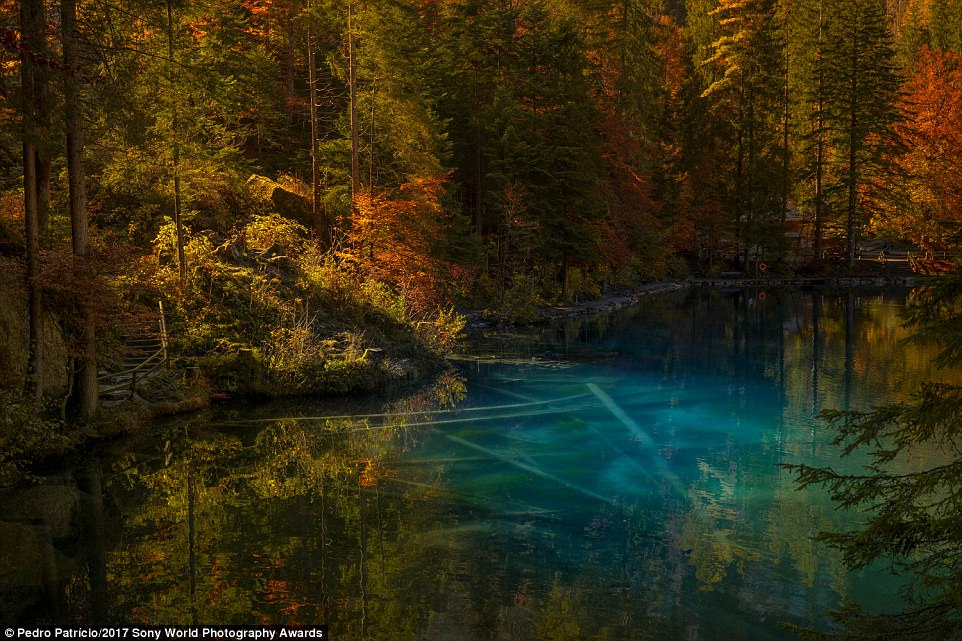 This eye-catching image of a lake and woodland was taken in the Bernese Oberland canton of Bern, Switzerland