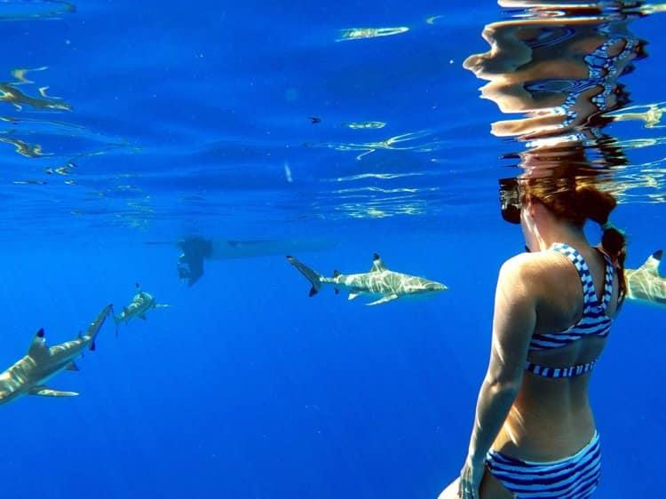 bơi cùng cá mập, cá mập