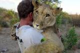 Sư tử là loài vật rất tình cảm, không hề hung dữ như bạn nghĩ (Video)