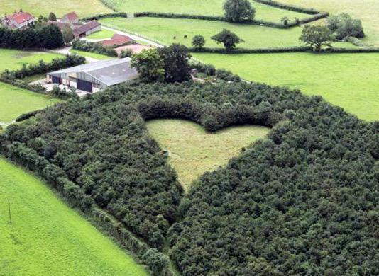 khu vườn trái tim