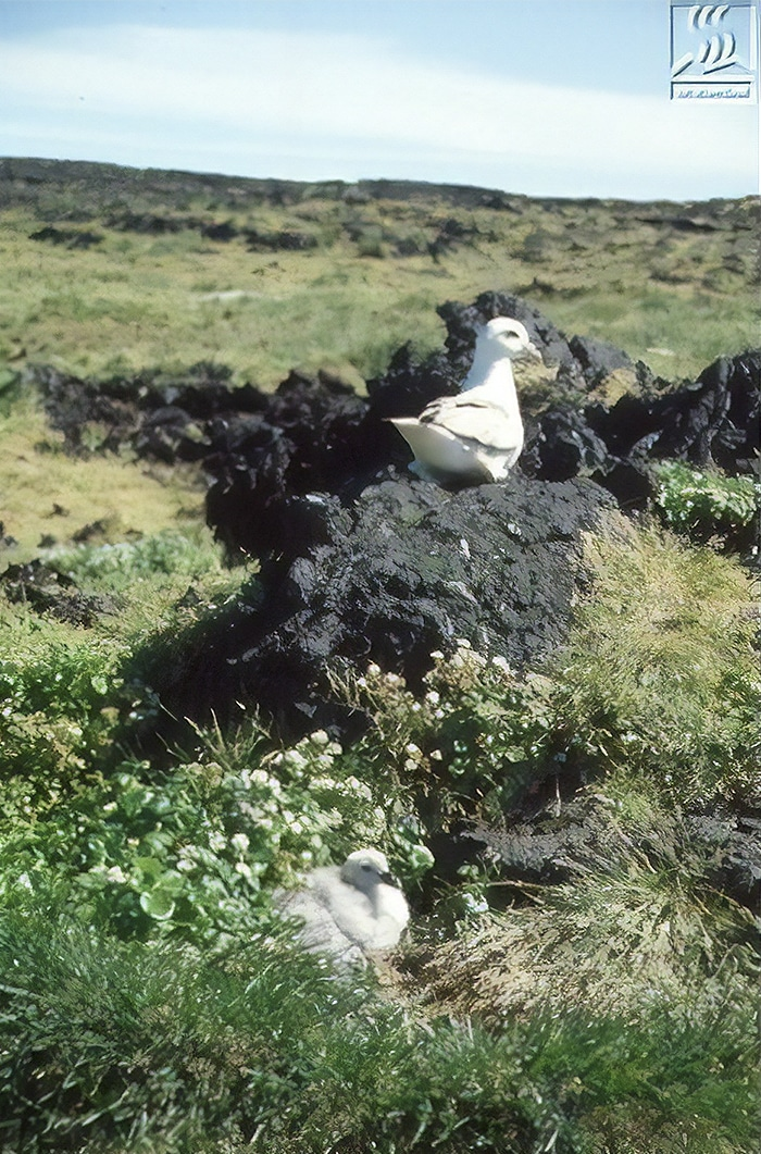 forbidden-places-on-earth-surtsey-island-iceland-14