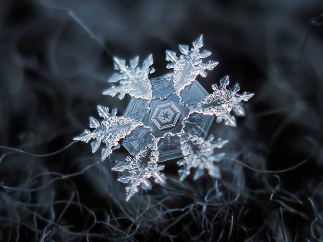 bông tuyết