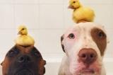 Khi động vật là bạn thân
