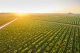 Hai công ty Úc sắp kiếm cả 'núi tiền' nhờ kiên trì trồng duy nhất 1 loại cây suốt hơn 1 thập kỷ