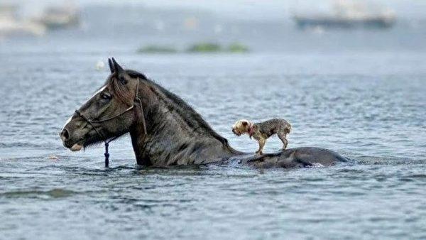 tương thân tương ái, động vật cứu động vật khác loài