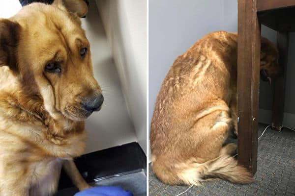 Chú chó quay mặt vào tường vì quá đau buồn khi chủ qua đời