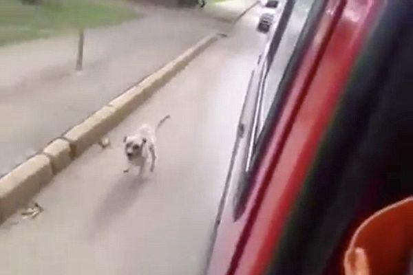 chú chó nhỏ