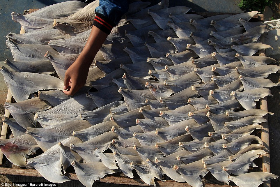 Parts of the shark are laid out to dry and arranged in size order