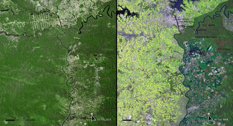 Deforestation is also prevalent in the South American Atlantic Forest in Paraguay — here