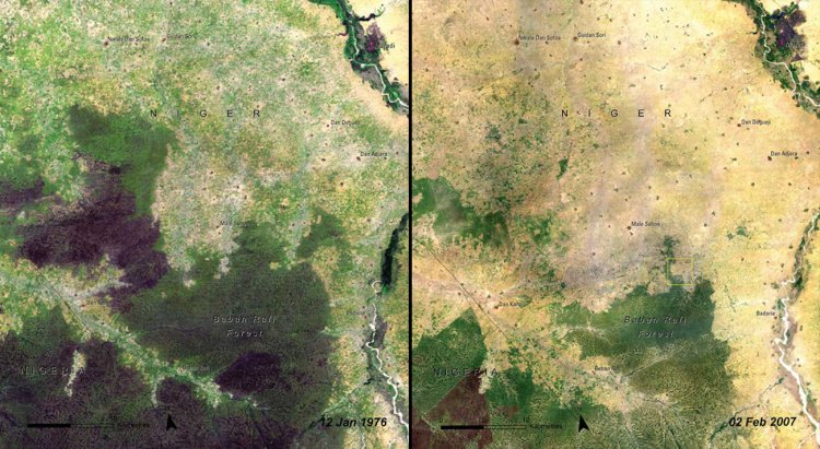 So was the Baban Rafi Forest in Niger, from 1976 (left) to 2007 (right).