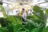 Bạn có thể cảm nhận được 'mùi vị' của chốn rừng xanh trên chiếc xe buýt đặc biệt này. (Ảnh qua: Alfie Lin)