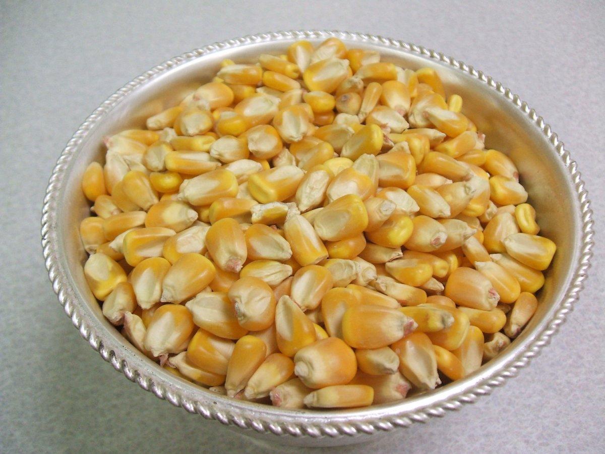 Belarus: corn
