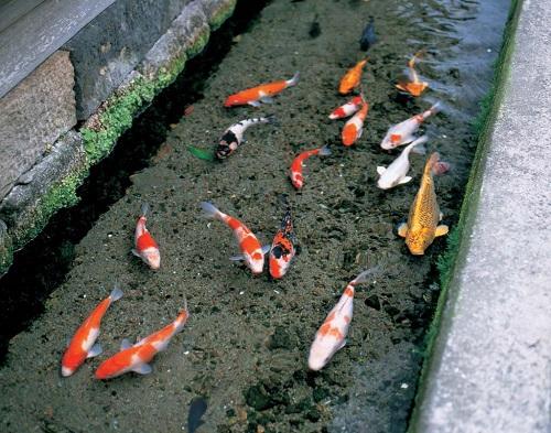 Cách người Nhật biến hóa với rãnh nước bẩn khiến cả thế giới thán phục