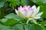 Ôn hòa là một loại thuốc giải độc cho sự oán hận