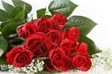 Câu chuyện cảm động: Bông hồng đêm Giáng Sinh
