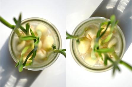 Mầm tỏi có giá trị dinh dưỡng vượt trội so với tỏi tươi (Ảnh: Internet)