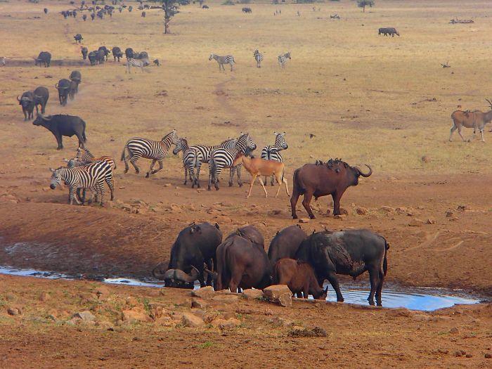 man brings water wild animals kenya 16 58aac704e53f2  700 Kenya: Người nông dân chở hàng ngàn lít nước mỗi ngày để cứu động vật hoang dã