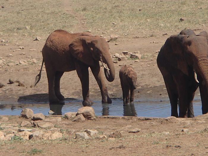 man brings water wild animals kenya 19 58aac70defc68  700 Kenya: Người nông dân chở hàng ngàn lít nước mỗi ngày để cứu động vật hoang dã