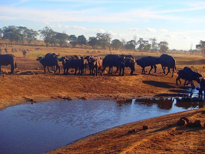 man brings water wild animals kenya 2 58aac6ddab715  700 Kenya: Người nông dân chở hàng ngàn lít nước mỗi ngày để cứu động vật hoang dã