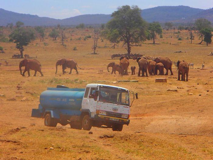 man brings water wild animals kenya 4 58aac6e294514  700 Kenya: Người nông dân chở hàng ngàn lít nước mỗi ngày để cứu động vật hoang dã
