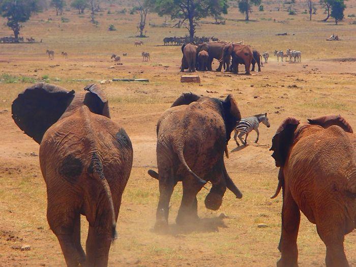 man brings water wild animals kenya 8 58aac6ed9cfcb  700 Kenya: Người nông dân chở hàng ngàn lít nước mỗi ngày để cứu động vật hoang dã