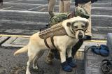 Gặp 'cô chó anh hùng' Frida đang cứu giúp các nạn nhân động đất tại Mexico