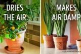Top 10 cây cảnh có khả năng điều hòa không khí trong nhà tốt nhất