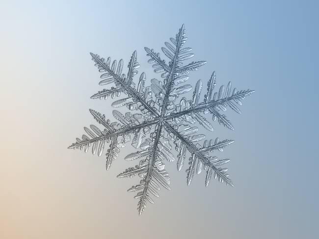 macro snowflake photo