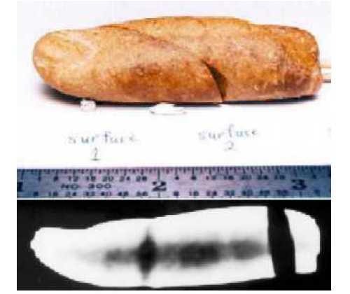 Trên: Ngón tay hoá thạch với niên đại 100 triệu năm tuổi (hoá thạch số hiệu DM93-083) được tìm thấy trên đảo Axel Heiberg ở Canada. Dưới: Ảnh chụp X-quang ngón tay hóa thạch cho thấy rõ cấu trúc xương bên trong. (Ảnh: paleo.cc)