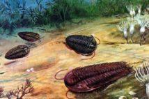 Bằng chứng hóa thạch về các nền văn minh tiền sử hàng triệu năm trước