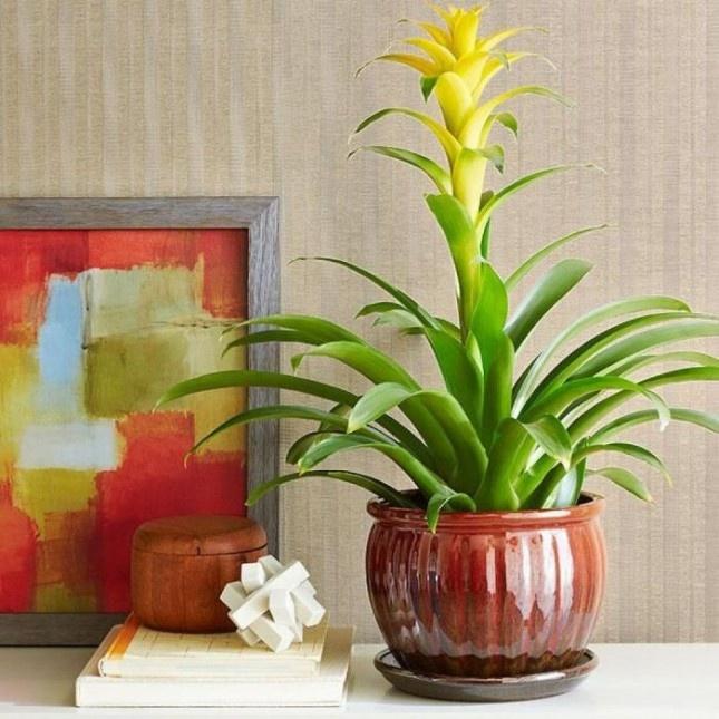 10 loại cây có thể trồng trong nhà vào mùa đông