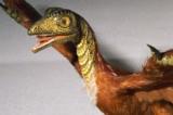 Các hóa thạch của thuyết tiến hóa: Sự thật hay bị làm giả?