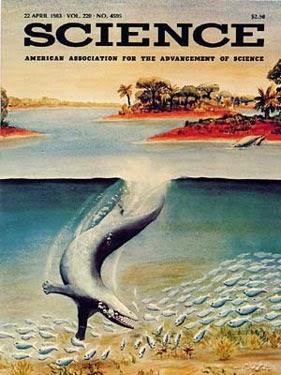 Ấn bản Science năm 1983 với hình vẽ con Pakicetus
