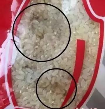 Gạo trong bếp trường mẫu giáo ở Cáp Nhĩ Tân, Trung Quốc bị mốc. (Ảnh: hlj.sina.com.cn)