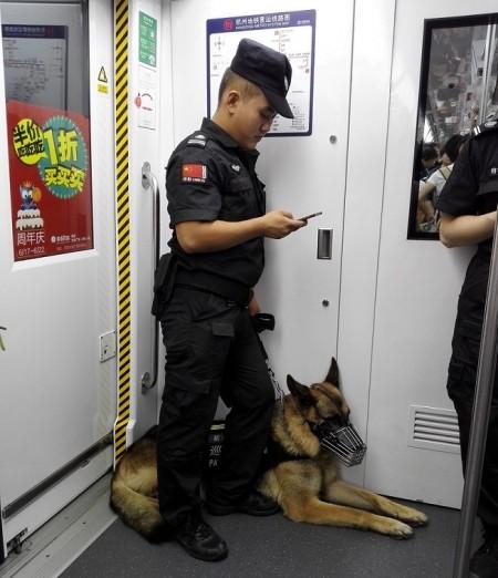 Cảnh sát và chó tuần tra