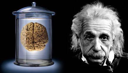 Rốt cuộc trí tuệ của thiên tài đến từ đâu?