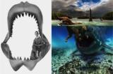 Cá mập tiền sử khổng lồ Megalodon vẫn còn sống dưới biển sâu?