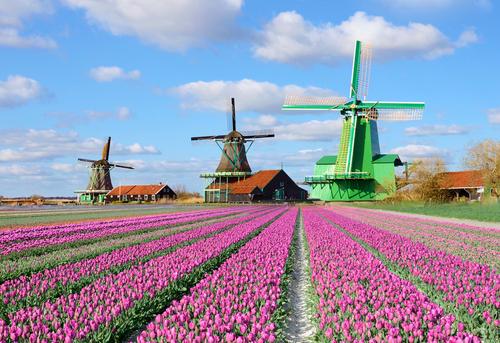 Kết quả hình ảnh cho campos de tulipanes en holanda