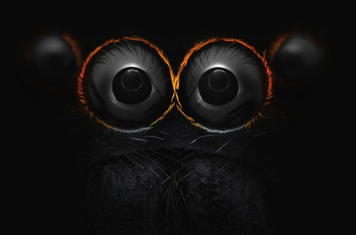 Mắt của một chú nhện nhảy (Yousef Al Habshi/Nikon Small World)