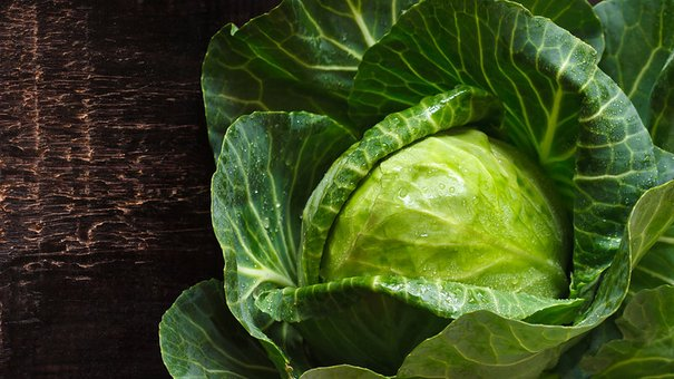Fresh kitchen garden cabbage with water drops on a wooden background.