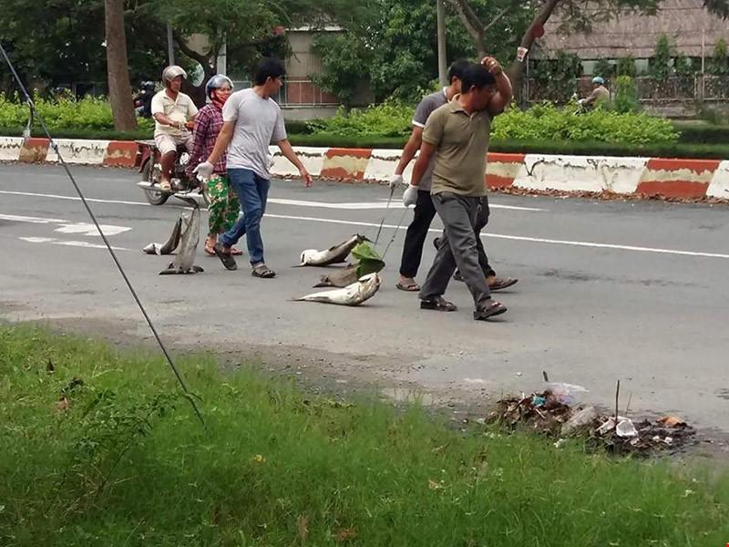Nông dân nuôi cá lồng bè mang xác cá ra chặn quốc lộ 51 để biểu thị sự phản đối trước sai phạm xả thải kéo dài không thay đổi. (Ảnh: plo.vn)