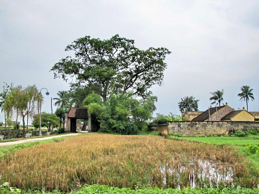 Ảnh minh họa: làng Đường Lâm (tác giả: Che Trung Hieu)