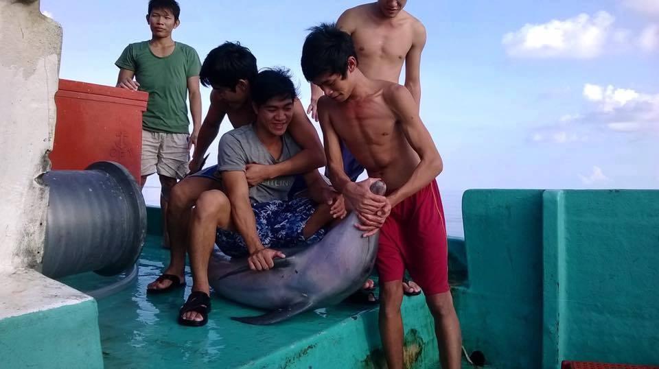 Một nhóm ngư dân bắt, giết cá heo trái phép. (Ảnh: FB Người Phú Quốc)