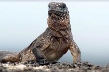Cảnh rượt đuổi gay cấn nhất trong phim phóng sự động vật từng được ghi hình