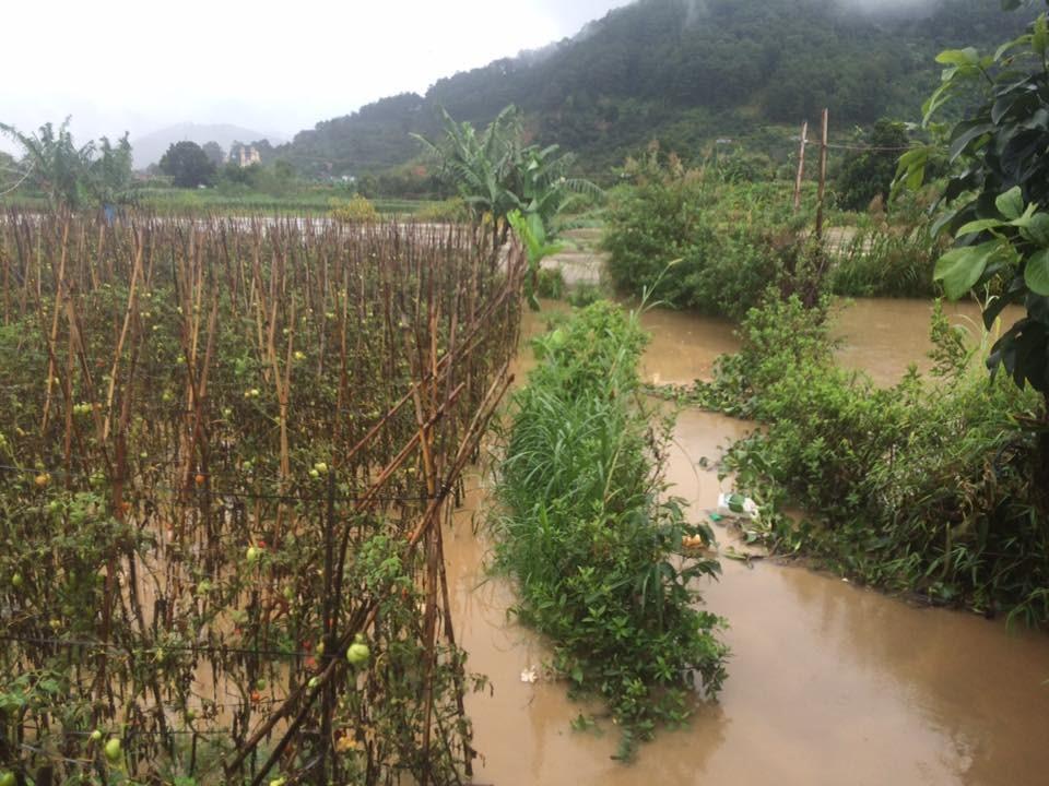 Ruộng cà tiêu điều trong mưa lũ. (Ảnh: Người dân địa phương cung cấp)