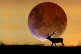 Bộ ảnh: Khắp thế giới hào hứng với hiện tượng 'siêu trăng' lịch sử