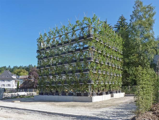 Toàn cảnh công trình platanen-kubus của anh Ludwig. (Ảnh: Ludwig)