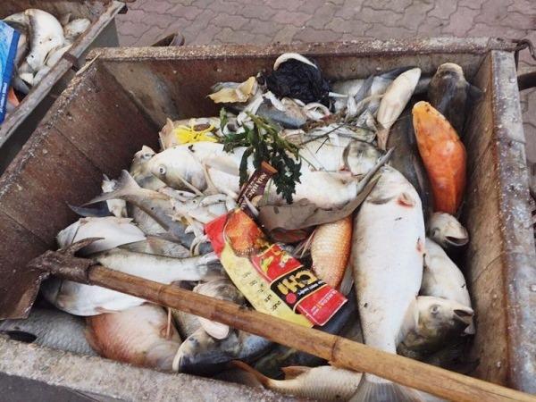Đầu tháng 10/2016, hơn 200 tấn cá chết nổi trắng hồ Tây được thu gom khiến người dân lo ngại về tình trạng ô nhiễm nước của hồ.